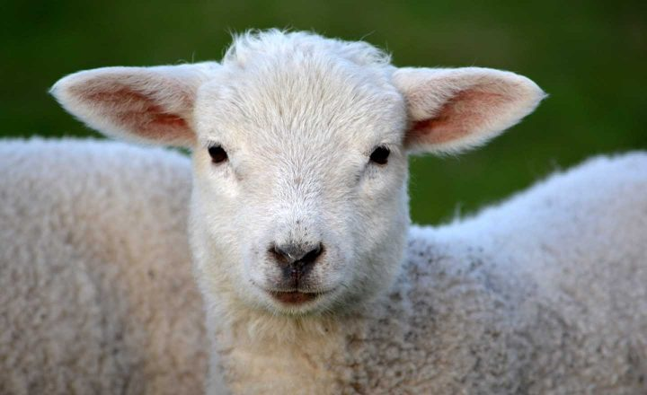 The cruelty of killing innocent animals can be a motive to stop eating meat.