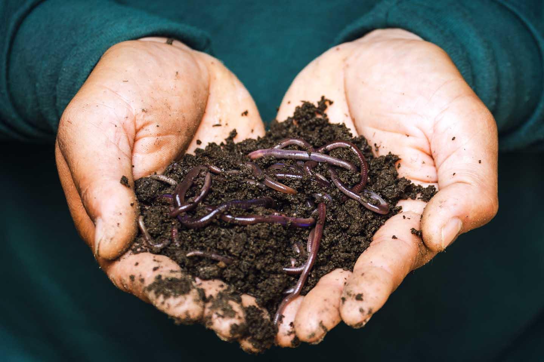 Organic soil with rainworms - Photo by Sippakorn Yamkasikorn from Pexels