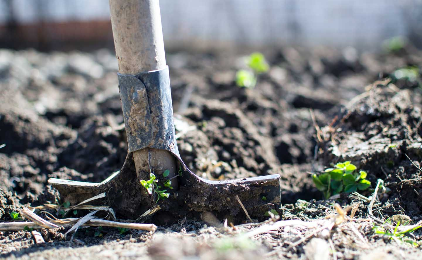 Loosing the soil with a spade - Photo by Lukas from Pexels