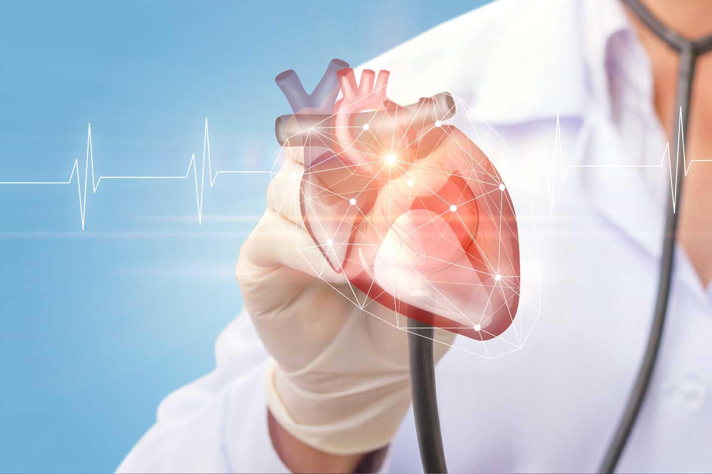 Examining the heart